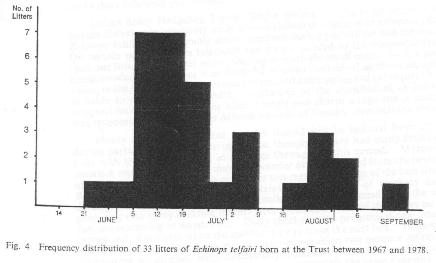 Fig. 4   Frequency distribution of 33 litters of Echinops telfairi born at the Trust between 1967 and 1978.